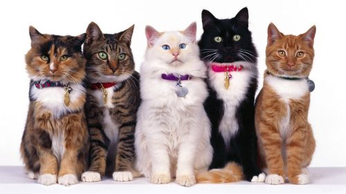 Fancy Felines Lined Up In Their Sunday Best